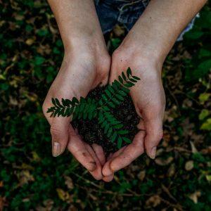 Surprise sustainability